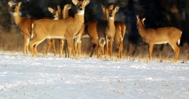 Muzzleloader Season for Deer Reopens Dec. 21