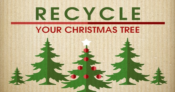 Christmas Articles.Calvert County To Offer Christmas Tree Recycling The
