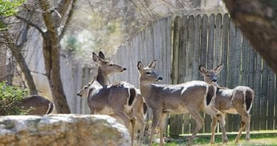 deer-management