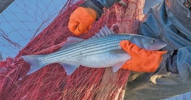 DH12873_striped_bass_Cvr