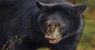 Maryland-Bear-Stamp-Winning-Artwork-19-20-768x536
