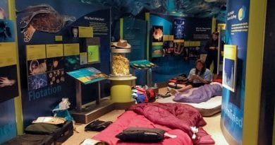 smithsonian-sleepover
