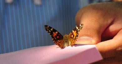 butterfly-memorial-release