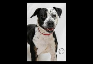 """SoMd Pets in Need """"Dog of the Week"""" Sissy Girl"""
