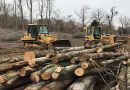 Forest conservation bills rippling through Maryland counties