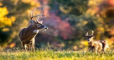 "Maryland's most popular hunt, ""Firearm Deer Hunting"", season opens Nov. 30"
