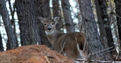 Maryland Deer Firearms Opening Day Harvest Up 29%