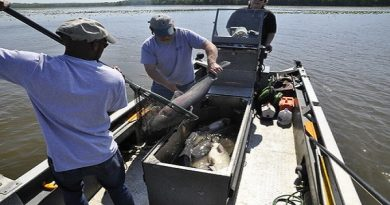 Department of Natural Resources Urges Congress to Address Rules Hindering Market for Invasive Blue Catfish