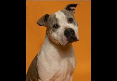 """SoMd Pets in Need """"Pet of the Week"""": Guinness"""