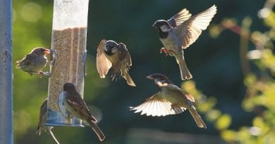 Bird Removal Tips: How To Keep These Animals Away From Your Property