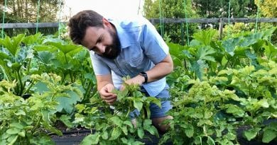 How to manage plant pests and diseases in your victory garden